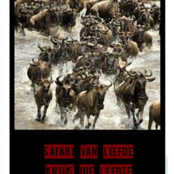 2. Safari of love